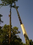 Crane Removal-Crownsville-Arundel Tree Service