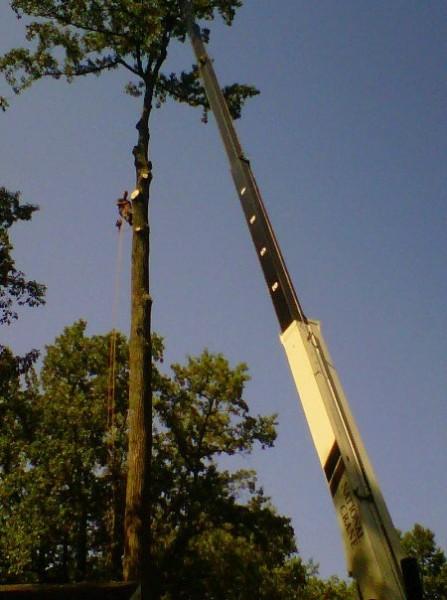 Crane Removal-Crownsville-Arundel Tree Service