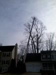Taylor Crane Job Arundel Tree Service
